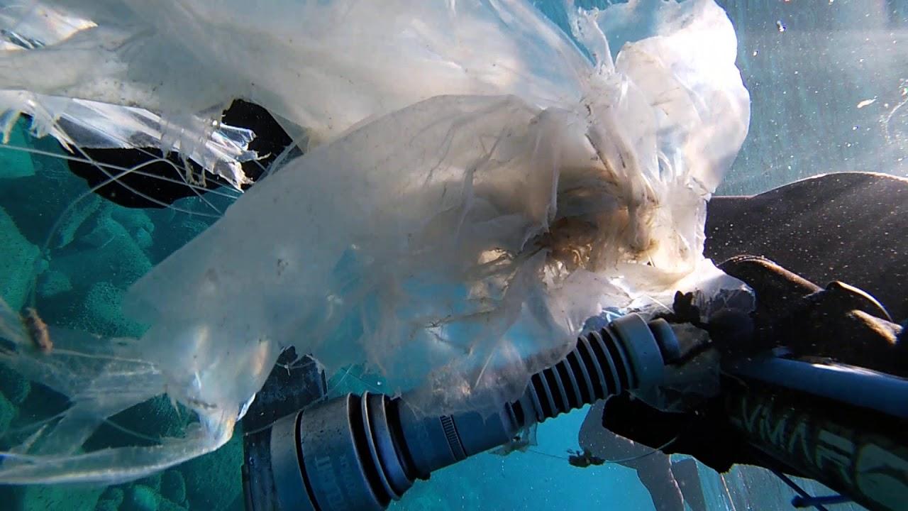 Una razza in difficoltà. Plastic that kills the sea!