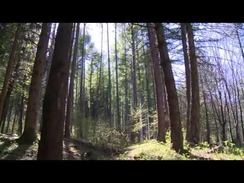 Foresta, legno, energia: una filiera DOCUMENTARIO (2014)