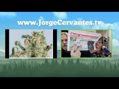 Jorge Cervantes Livestream from December 1st, 2011