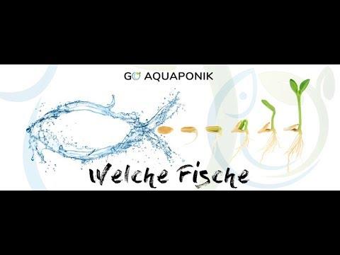 Welche fische f r ein aquaponik system youtube for Welche fische fur miniteich