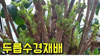 베란다 수경재배(2탄)  키웠더니 대박!!