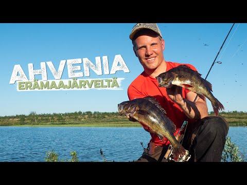 Ison ahvenen kalastusta erämaajärvellä Lapissa // Perch Fishing in Lapland, Finnmark