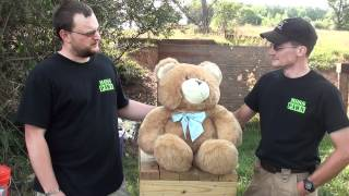 FAQs Episode 1: Teddy Bears