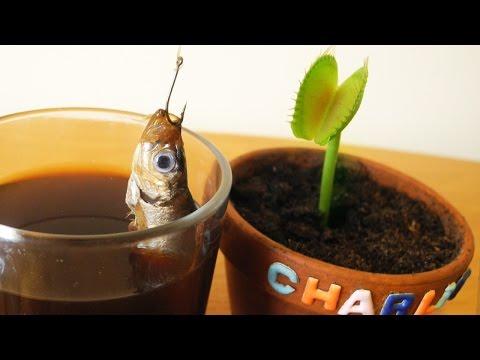 WTF is happening?! Charlie Venus Flytrap