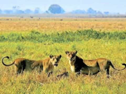 Zambia Safari Tours: Explore the Beauty of Zambia on an African Safari Vacation