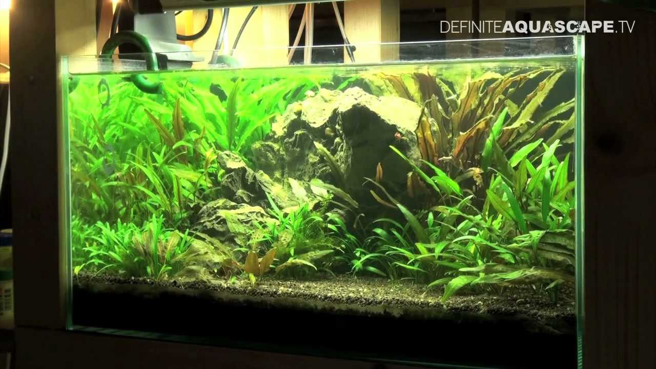 Aquascape Planted Tank 60x40x30 No 3 Low Tech Style