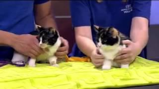 Pets on Parade - 09/19/15 - adoptable pets