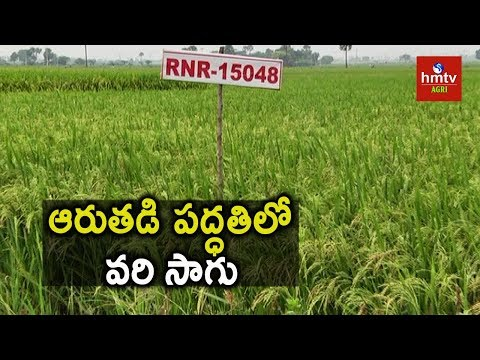 RNR Paddy Farming | Modern Techniques in Paddy Farming | hmtv Agri