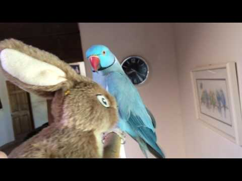 A Visit With Marnie The Talking Parrot