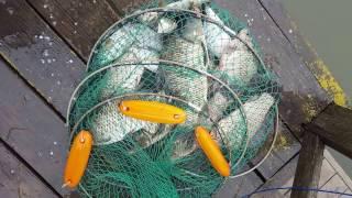 Маевка, рыбалка, Дунай(Маевка, рыбалка, Дунай., 2016-05-10T16:30:12.000Z)