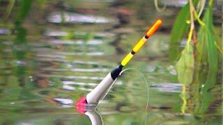 Рыбалка летом Когда ЛУЧШЕ клюёт рыба