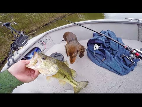 Spring Bass Fishing With The Puppy  She is GOOD Luck
