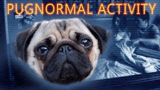Pugnormal Activity thumbnail