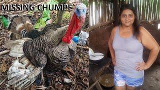 Missing Chumpe - Chumpe de Gladis la Sirenita extraviado, se ofrece recompensa.. thumbnail