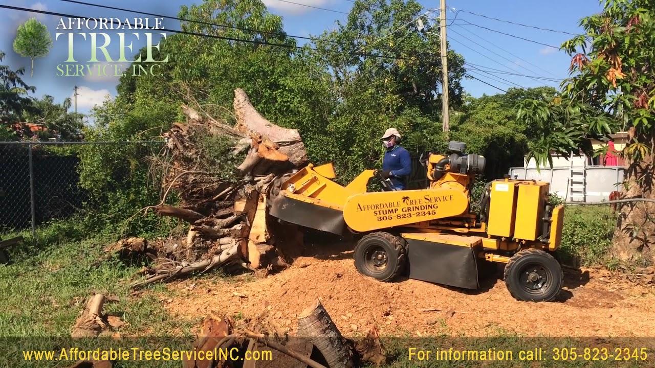 Tree Stump Grinding Process Services Miami Broward