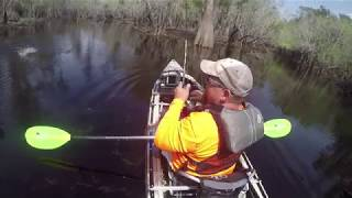 Hungry Fish, Hungry Gators, Spring in the Okefenokee