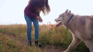 Young woman playing with husky dog | playing with dogs | how to play with dog | wildlife of animals