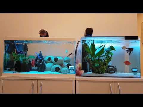 How To Properly Feed Your Fishes And Avoid Overfeeding