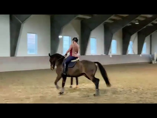 Canter Seat Training