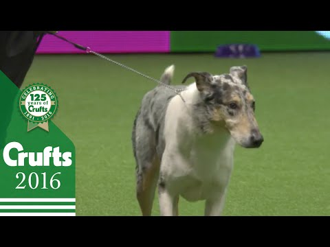 Kennel Club Vulnerable Breeds Competition Final | Crufts 2016