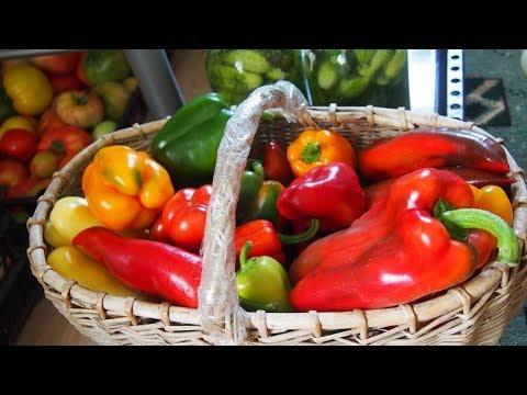 Вопрос: Стоит ли сажать сорт перца Яблочный спас , какие отзывы, фото?