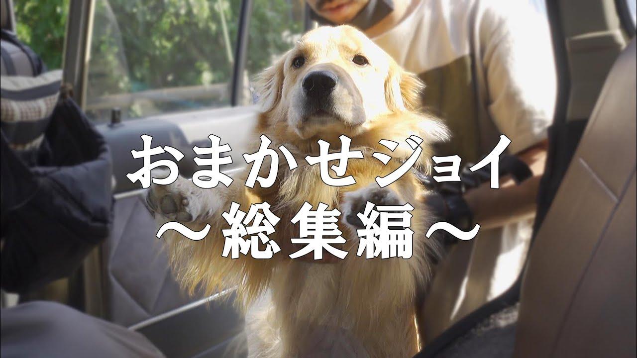 大好評お任せジョイ総集編!