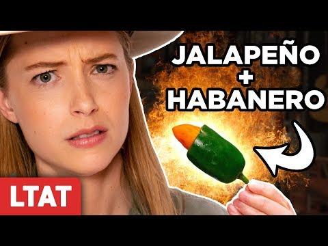 Jabanero Pepper (Habanero + Jalepeño) Taste Test