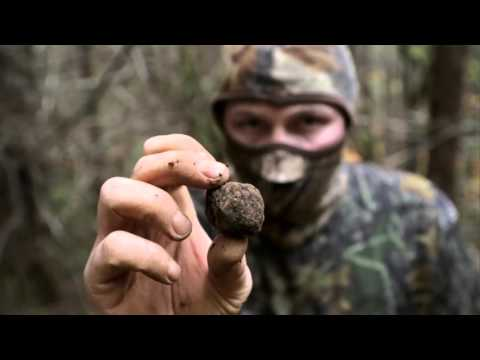 Unearthed Truffles How To Find