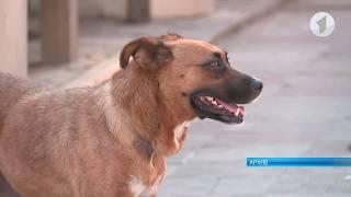 В Бендерах против собак применяют запрещенный препарат