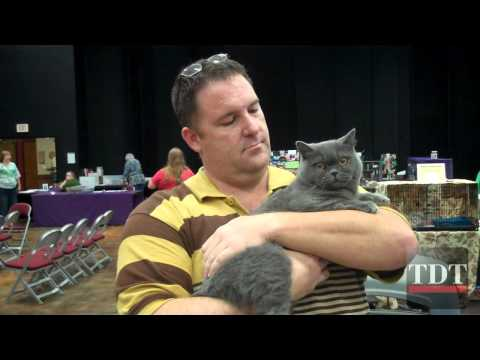 Austin Cat Fanciers Association Cat Show