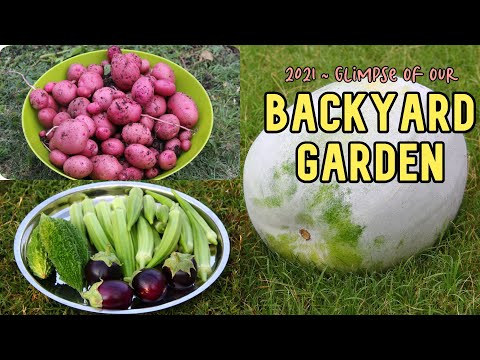 Our vegetable garden in America / അടുക്കളതോട്ടം