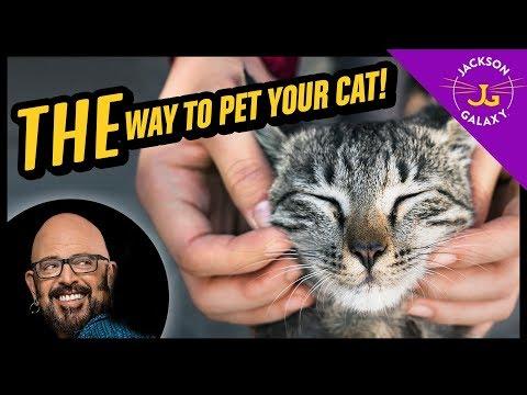 Cat Petting 101