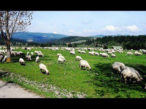 Peisaje rurale (2) - Rural Landscapes (2) (Harghita County, Romania)