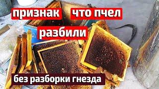 Исчезли пчелы ВОРОВСТВО ИЛИ НАПАД ПЧЕЛ Ошибки пчеловода