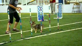Lamesa - Hamilton Dtc Akc Dog Agility Trial Open Jww 9/25/11