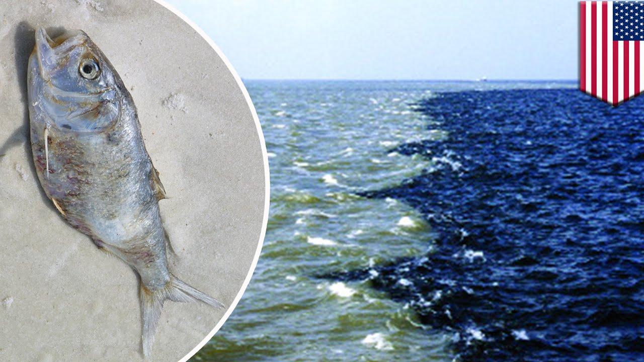 Ilustrasi Zona Mati di Teluk Meksiko