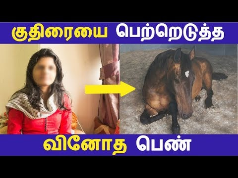 குதிரையை பெற்றெடுத்த வினோத பெண்   Tamil Facts   Latest News   Tamil Seithigal