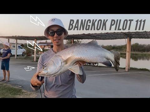 UNSTOPPABLE: Big Head Carp, Mekong Giant Catfish, Giant Snakehead, Barramundi FISHING BANGKOK PT2