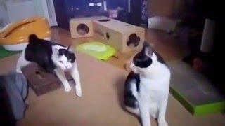 猫を多頭飼いしている我が家の母猫と長男猫です。 妊娠した野良猫を子猫...