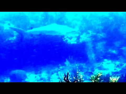 Boat dive to Congo & Stevens shark swimming by