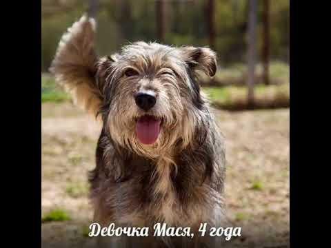 Все собаки фестиваля ДОМОЙ!