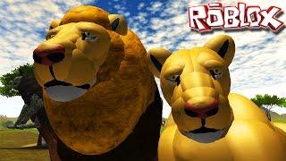 O Rei Leão, Caçando Búfalos e Lobos | Survival (Pre-Alpha)