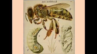 Anatomy of Animals: Invertebrates, Arthropods, & Vertebrates, Video Lecture-01.