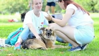Adopt a dog возьми собаку из приюта