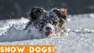 Funniest Snow Dog Video Compilation December 2018 | Funny Pet Videos