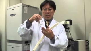 生命工学科 バイオマテリアル研究室