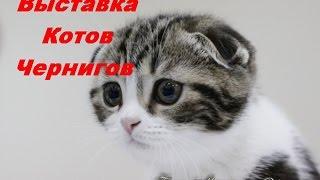 выставка котов  Чернигов Голливуд the exhibition of cats Chernigov Hollywood