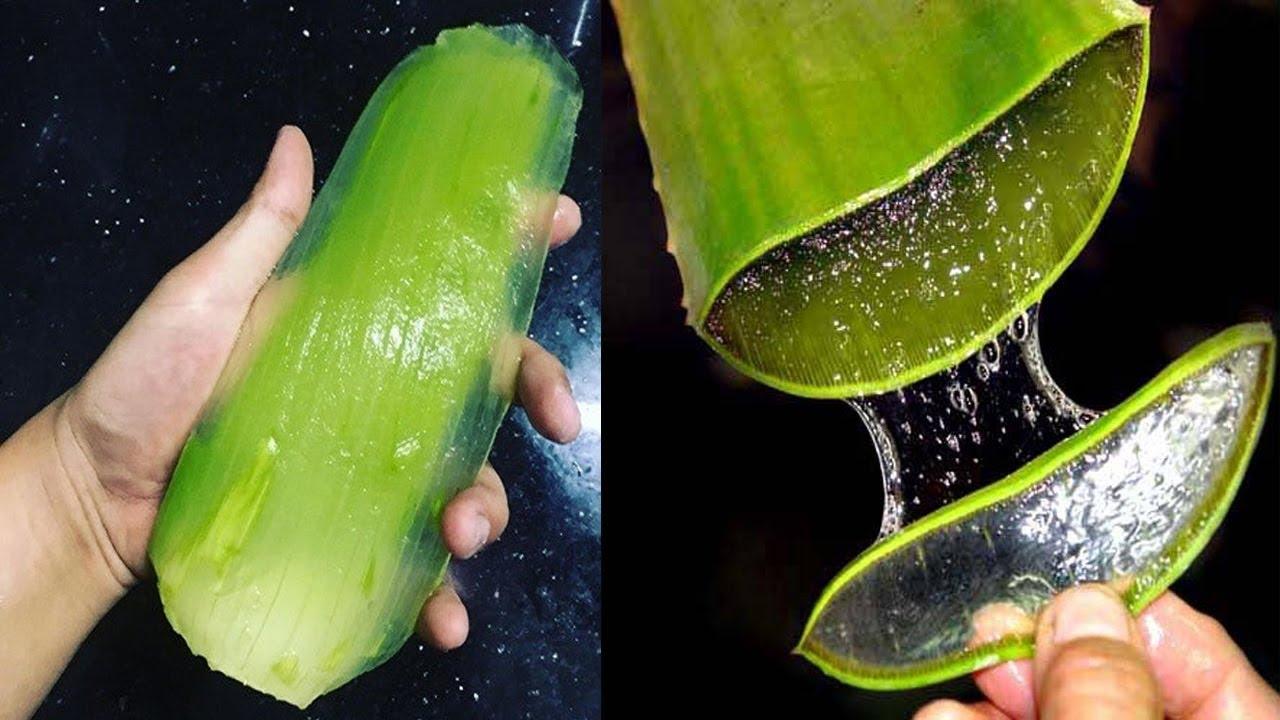 How To Use Aloe Vera To Treat Diabetes