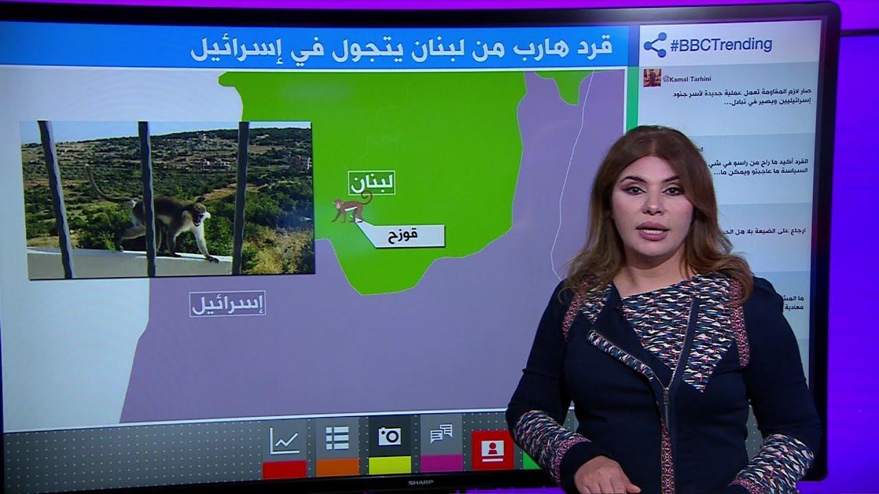 قرد لبناني يخترق الحدود مع إسرائيل ويثير نكات على الجانبين