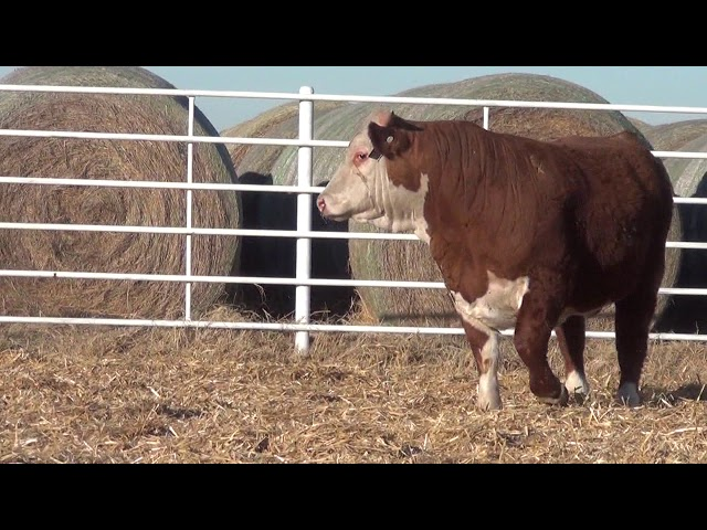 Express Ranches Lot 230